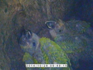 Inside a parrot's nest. Image captured using our inspection camera!